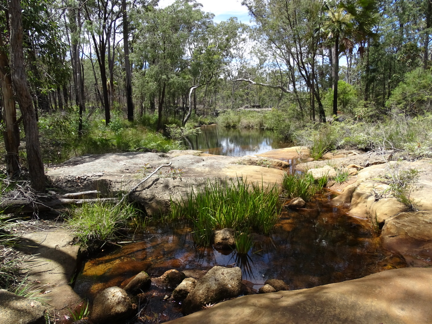 bush walk and creek