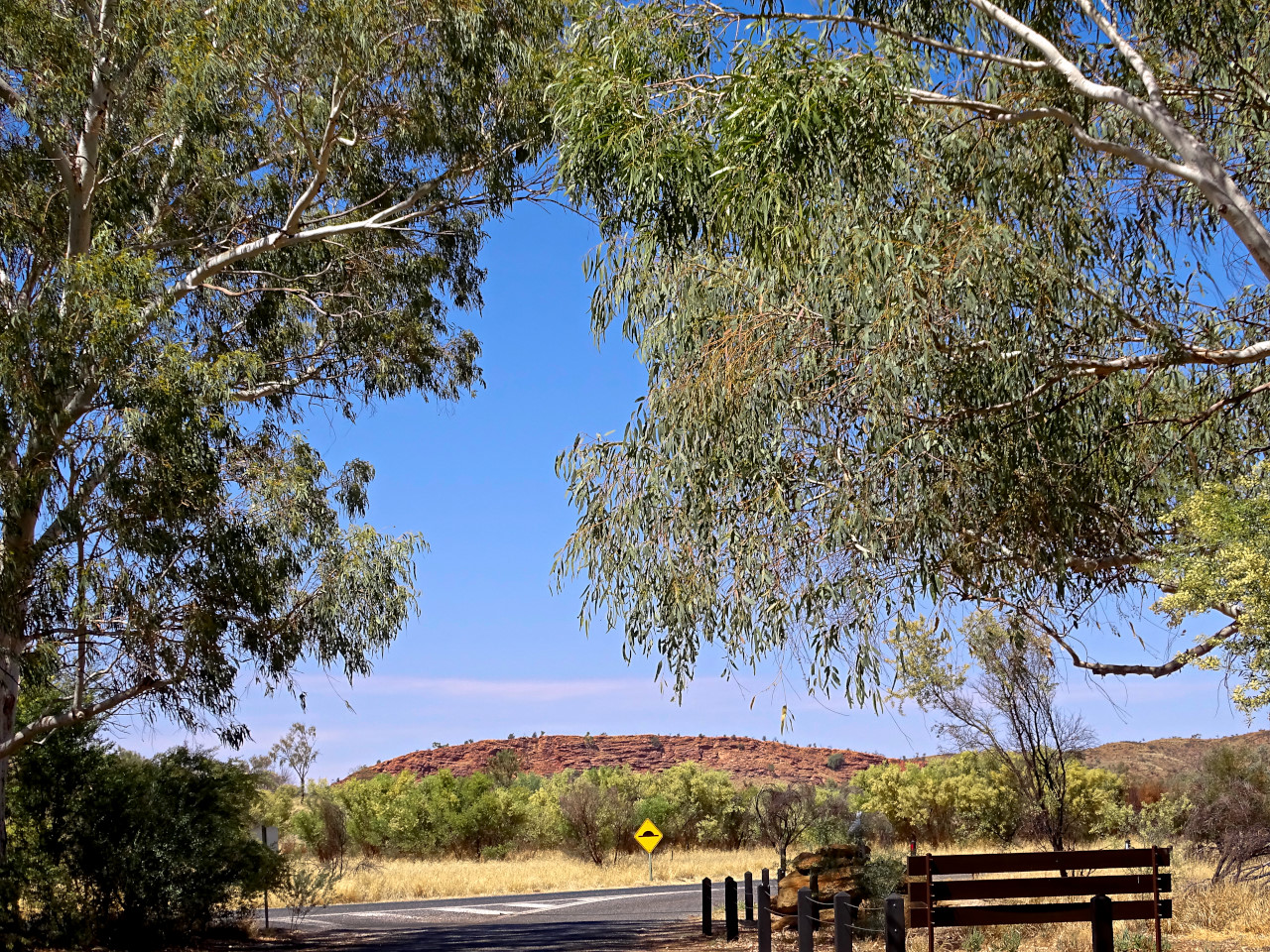 Central Australia trees and road