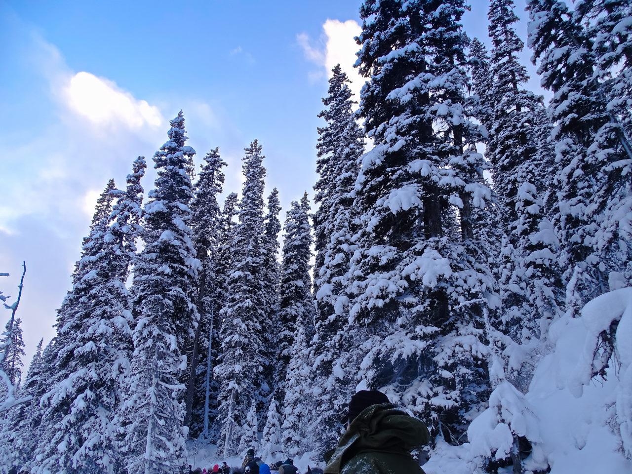 Canada Snow on Trees