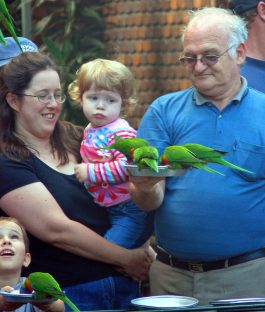 Feeding the Lorikeets at Currumbin