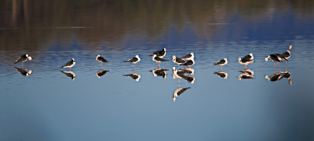 Birds on Water