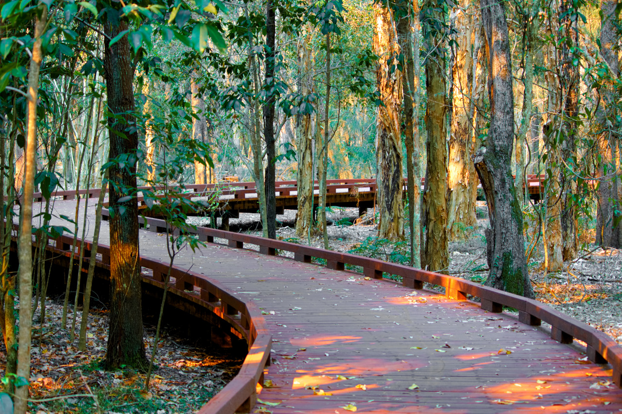 Coombabah Boardwalk