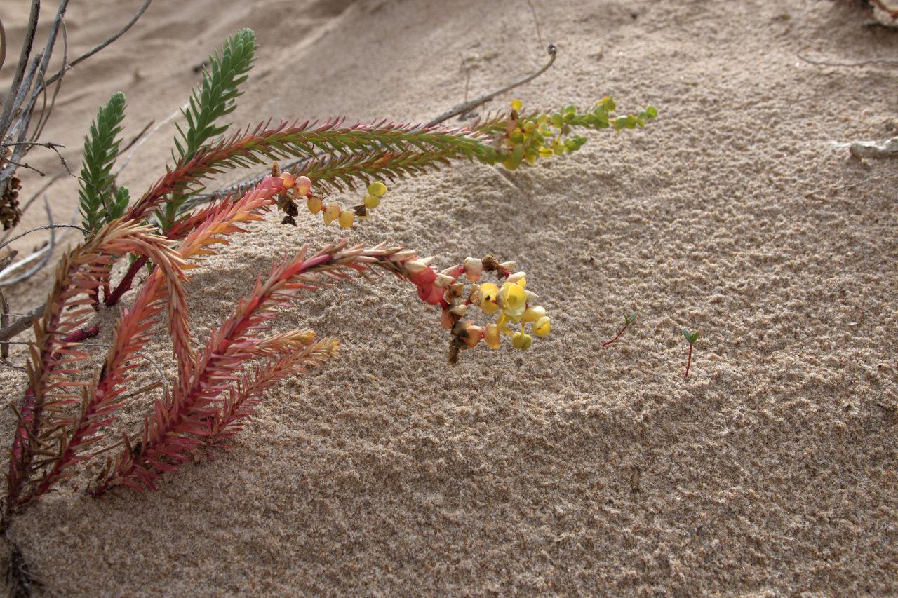 Wild Flowers Unedited
