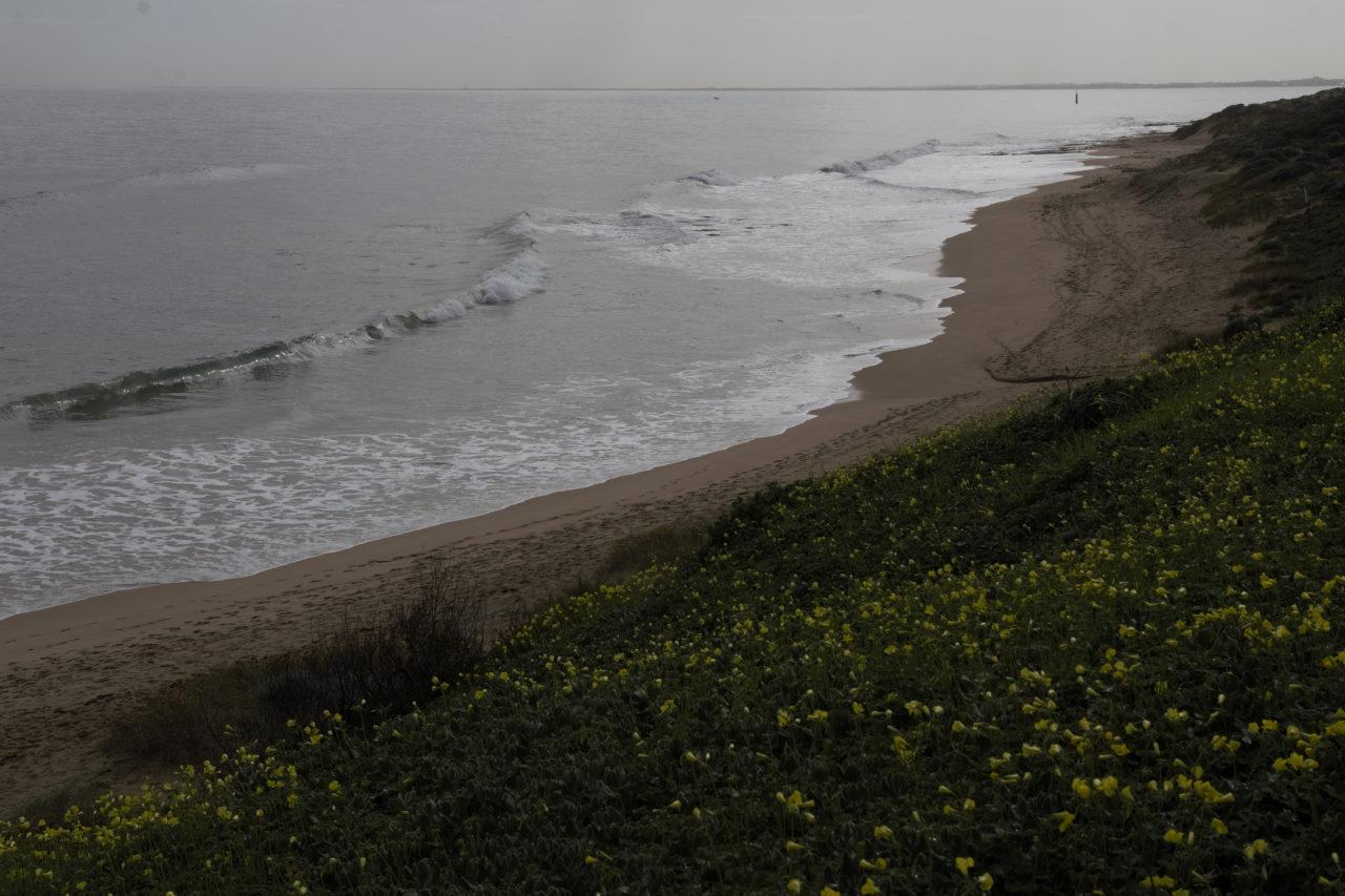 WA Blu Bay Beach _ Flowers Unedited